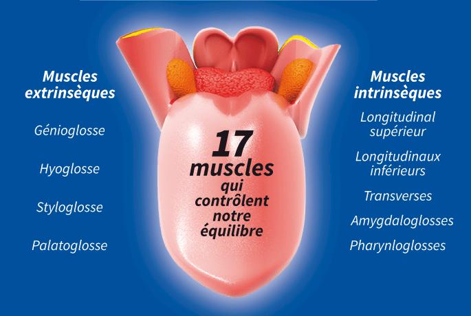 La langue, organe majeur de notre corps